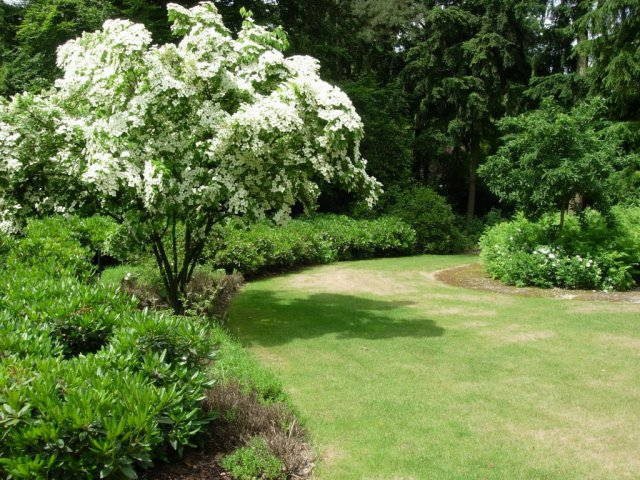 Kunstgras en snoeiwerk onderhoud aan tuin